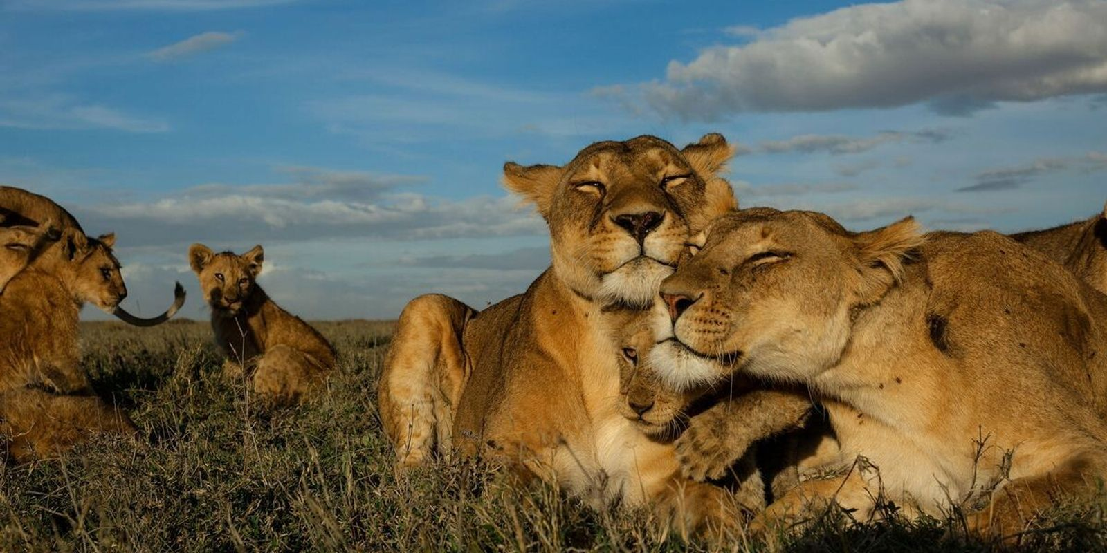 Protecting Big Cats