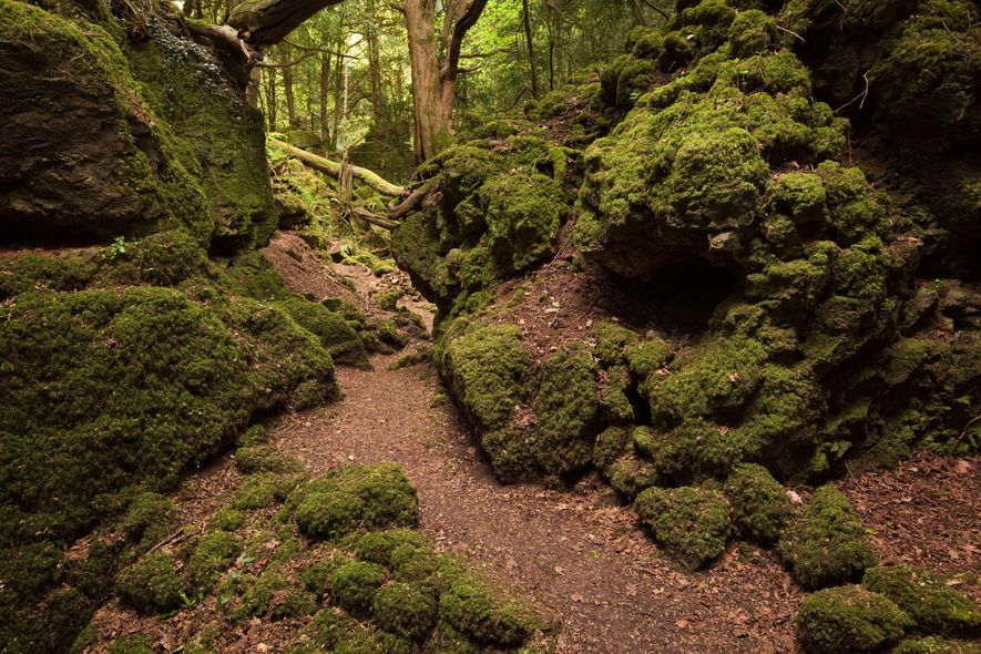 The atmospheric Puzzlewood in the Forest of Dean, Gloucestershire was the location for a battle scene ...