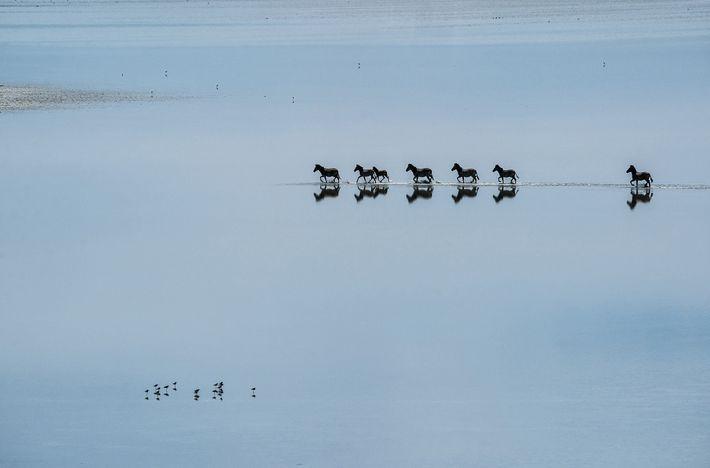 Zebras make their trek through the Makgadikgadi Salt Pans, the remnants of an ancient lake southeast ...