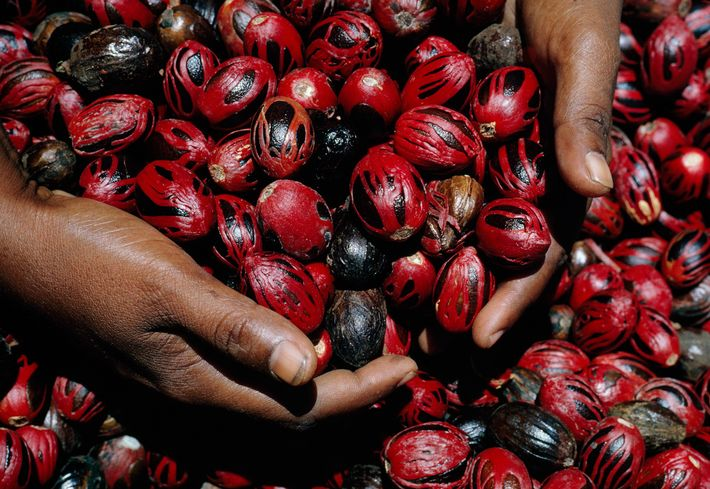 """Known as the """"Isle of Spices,"""" Grenada offers tours of ecologically minded nutmeg farms—the fruit of ..."""