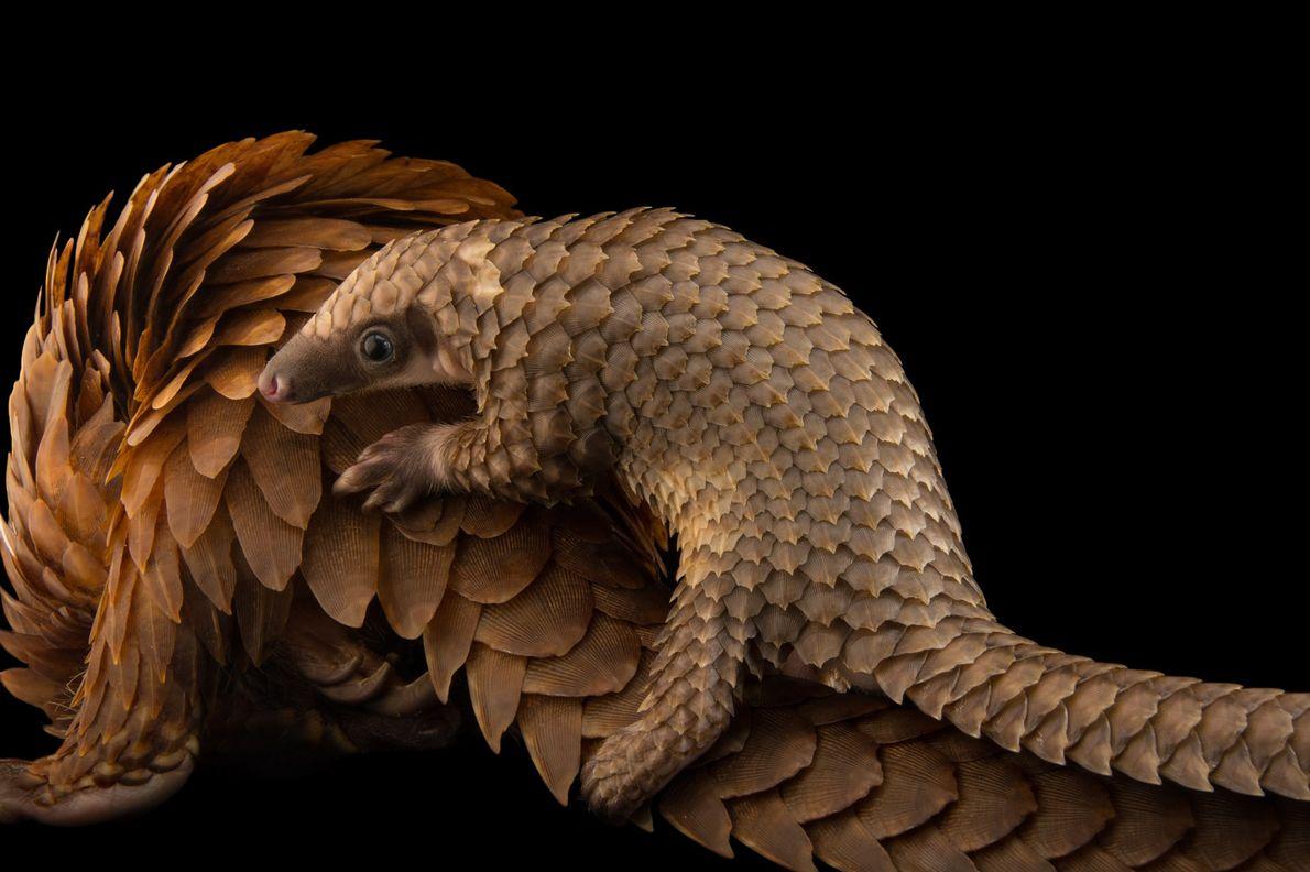 ST. AUGUSTINE, FLORIDA Nebraska-based Joel Sartore has spent nearly 15 years photographing animals in captivity—a visual record, ...