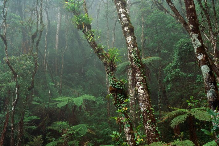 Cloud forest covers the mountains in Malaysia, on Borneo. Several countries—Malaysia, Indonesia, and Brunei—make up the ...