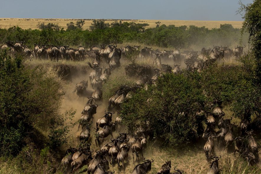 Late summer to early fall is the best time to see Masai Mara's famous wildebeest migration.
