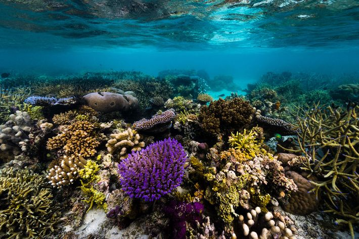 Papua New Guinea is famous for its biodiversity, both on land and at sea.