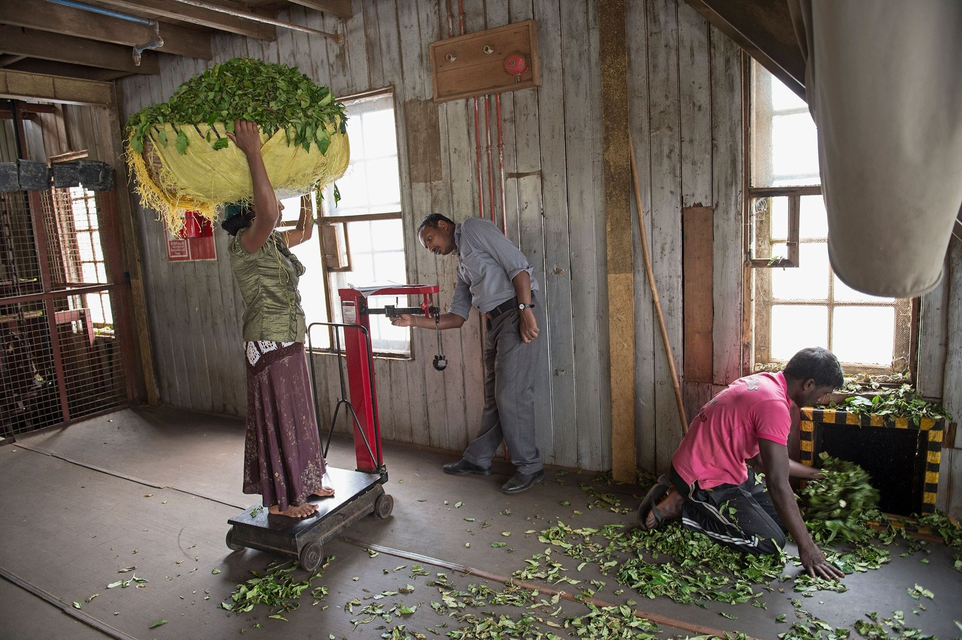 Inside Saint Clair's estate in Sri Lanka, workers weigh tea leaves.  ...