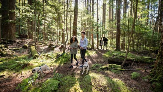 Forest walk, North Vancouver, British Columbia.