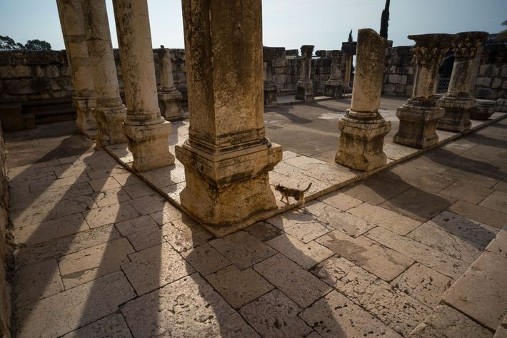 The columns of a partially restored, second- to fifth-century synagogue in Capernaum lie atop an older ...