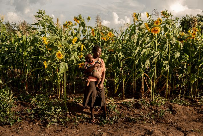 Susan Meneno holds her year-old daughter in front of her family's sunflower field in Uganda's Bidibidi ...