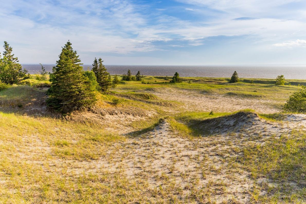 Biodiverse Pointe-aux-Outardes Nature Park features nine different ecosystems, including expansive sandy beaches and boreal forest.