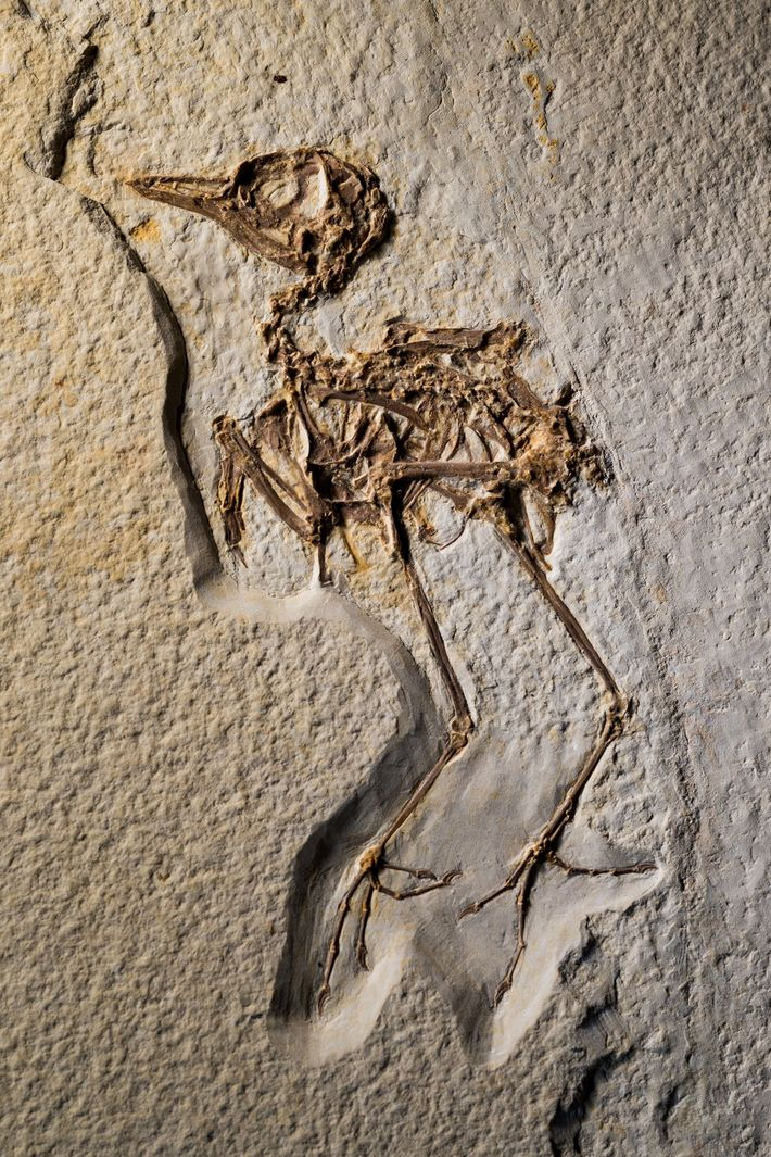 The 52-million-year-old rock layer of Fossil Lake in Wyoming holds abundant, exceptionally preserved fossils, such as ...