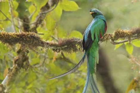 The quetzal quest