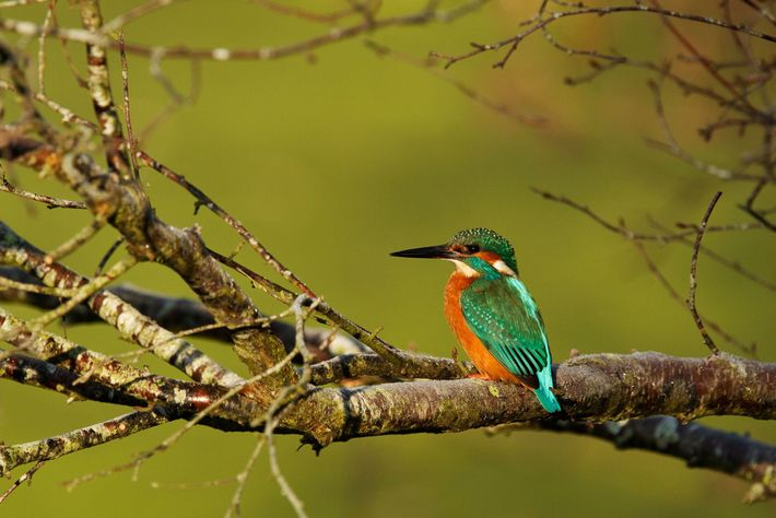 Rainham Marshes in Essex attracts a multitude of beautiful birds such as the kingfisher.