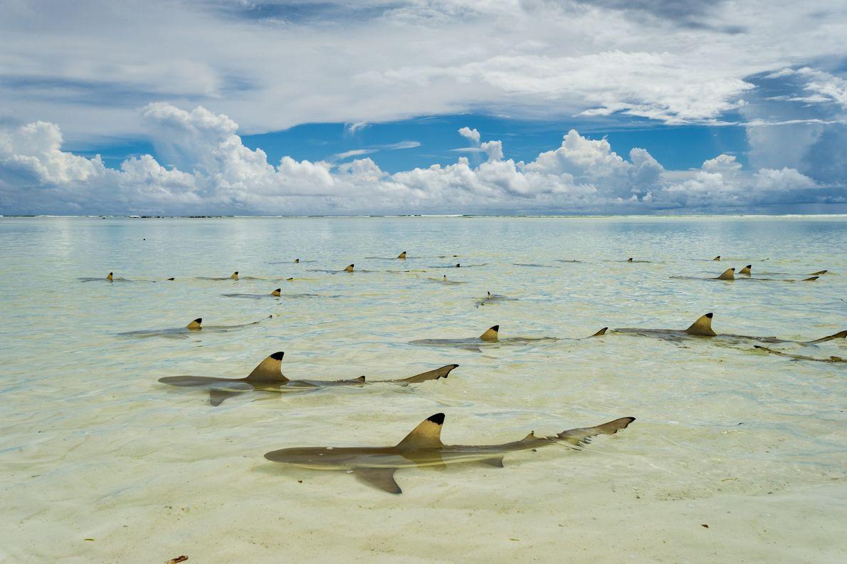 Aldabra Atoll, Seychelles.