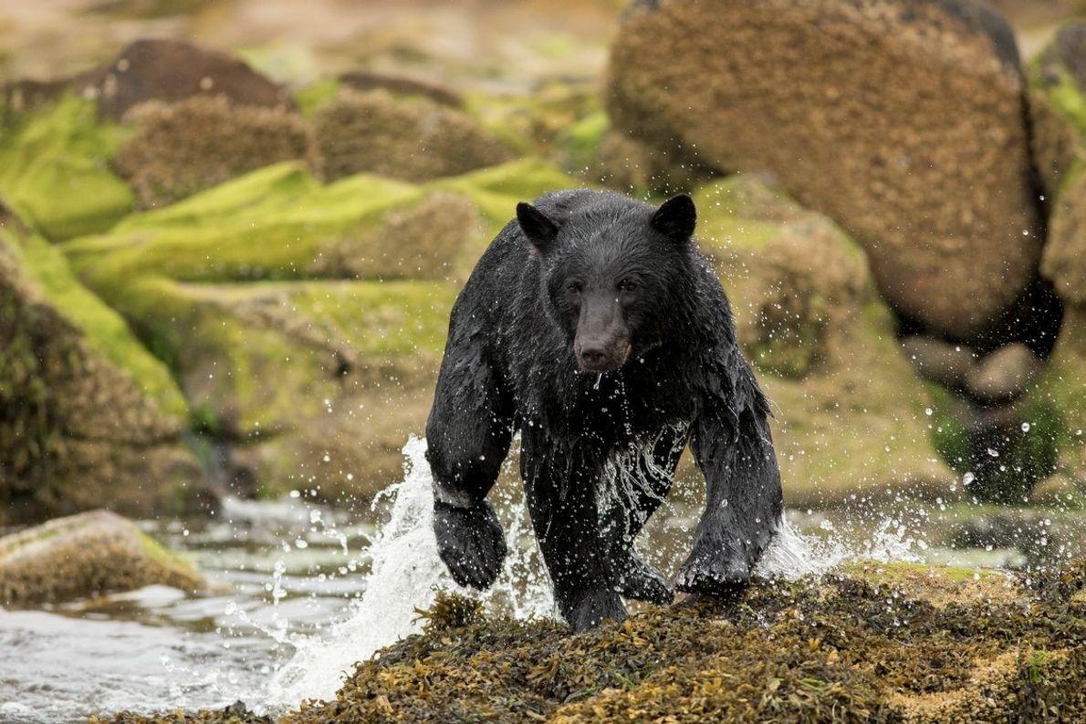 You might get lucky and spot a black bear, bald eagle, or elk along the shores ...