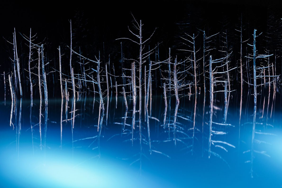 Trees on blue pond are illuminated every night during winter. It seems that they are dancing ...
