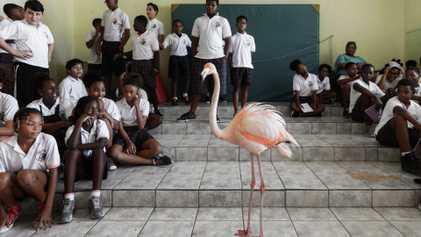 Meet Bob, the Flamingo Ambassador of Curaçao