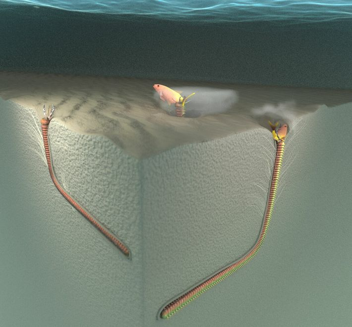 A 3D model shows the feeding behavior of sand striker worms and the proposed formation of ...