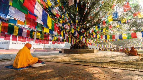 A Buddhist sage, known as a sadhu, sits under a  bodhi tree in Lumbini, which is ...