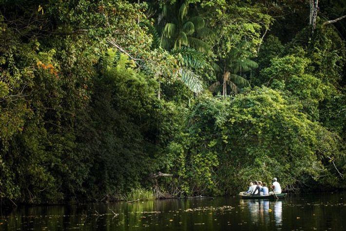 The Bolivian rainforest.