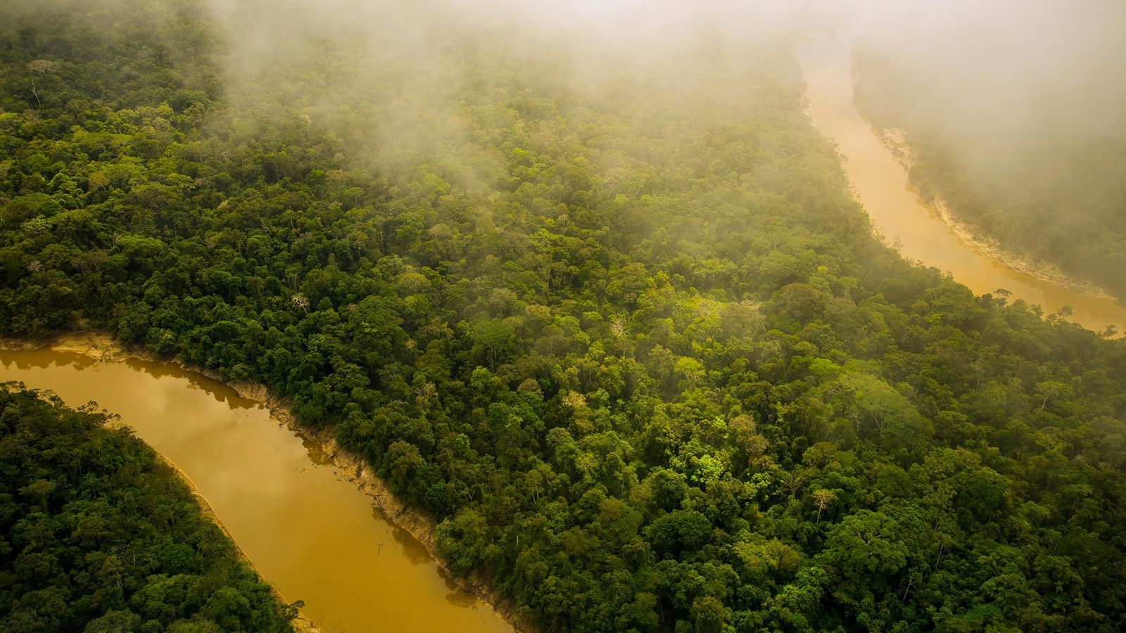 There is more to the Amazon rain forest, pictured here, than meets the eye, says the ...