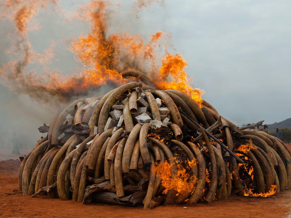 Inside the disturbing world of illegal wildlife trade