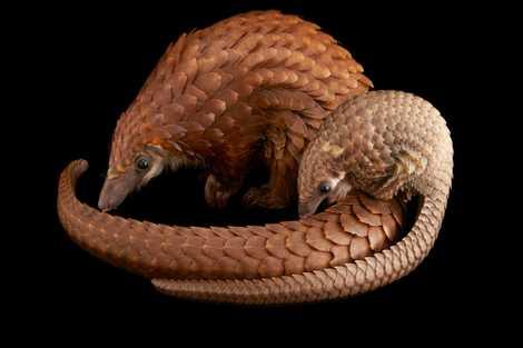 Inside the disturbing world of illegal wildlife trade - 1
