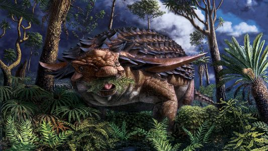 Armoured dinosaur's last meal preserved in stunning detail