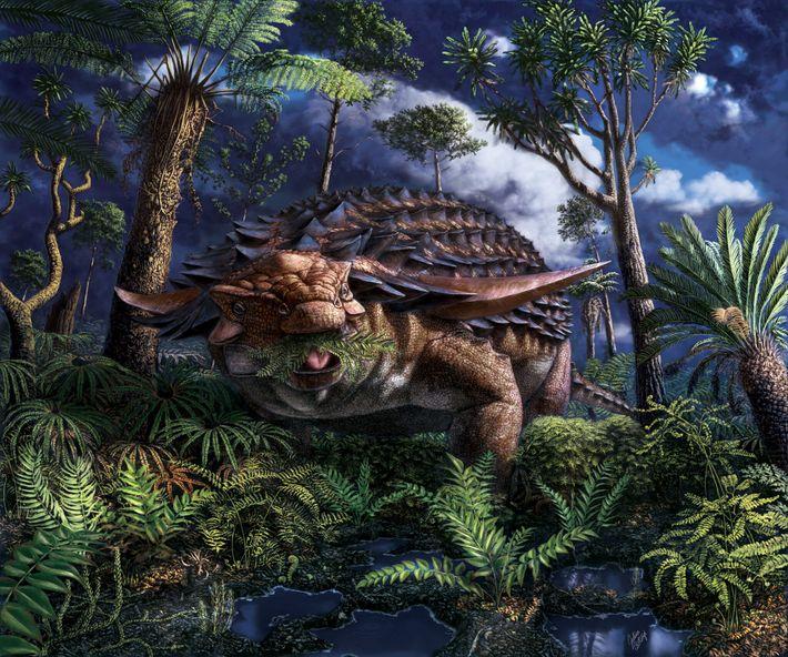 Some 110 million years ago in what's now northwestern Alberta, the nodosaur Borealopelta markmitchelli ate ferns ...