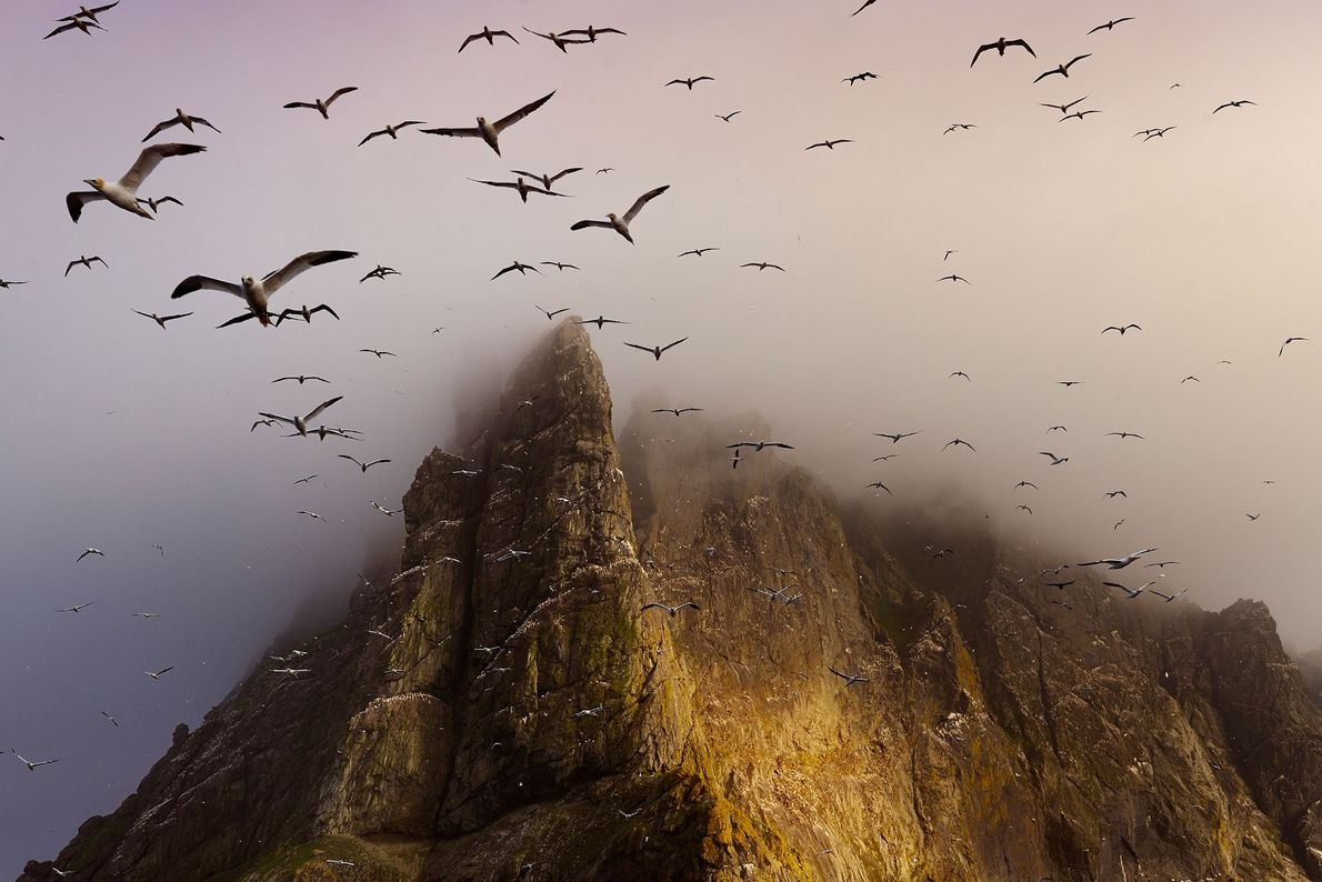boreray-birds-richardson