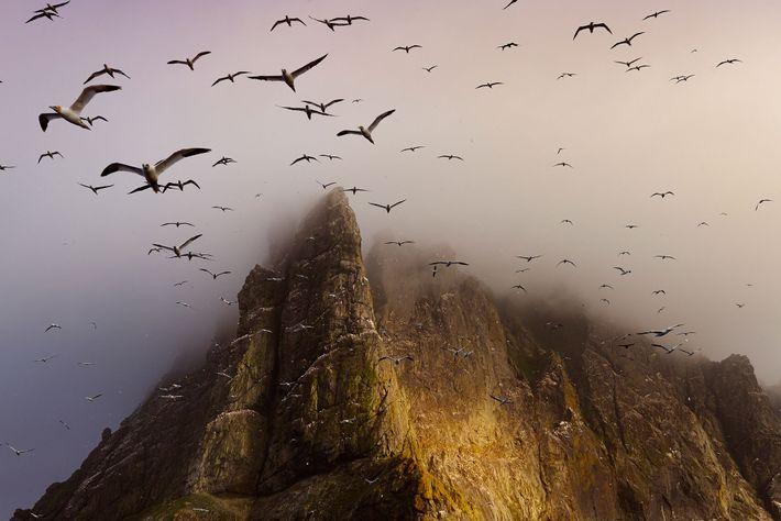 boreray-birds-richardson