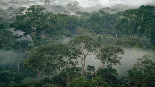 How termites help rainforests survive climate change