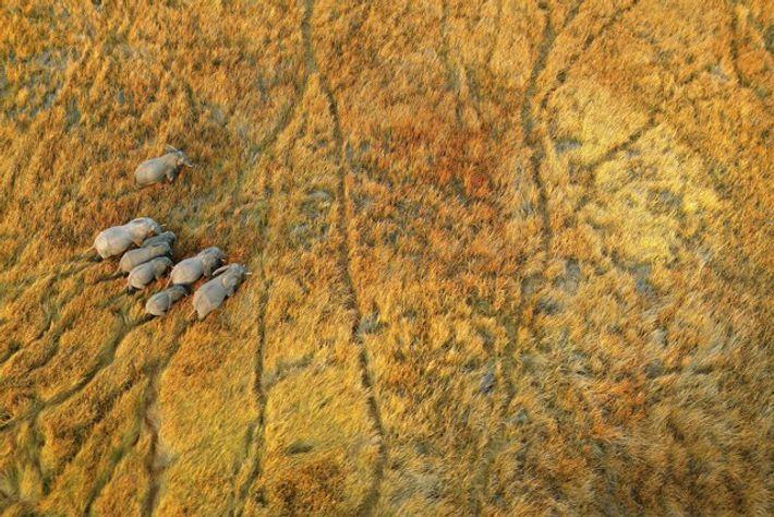 Botswana delta aerial shot