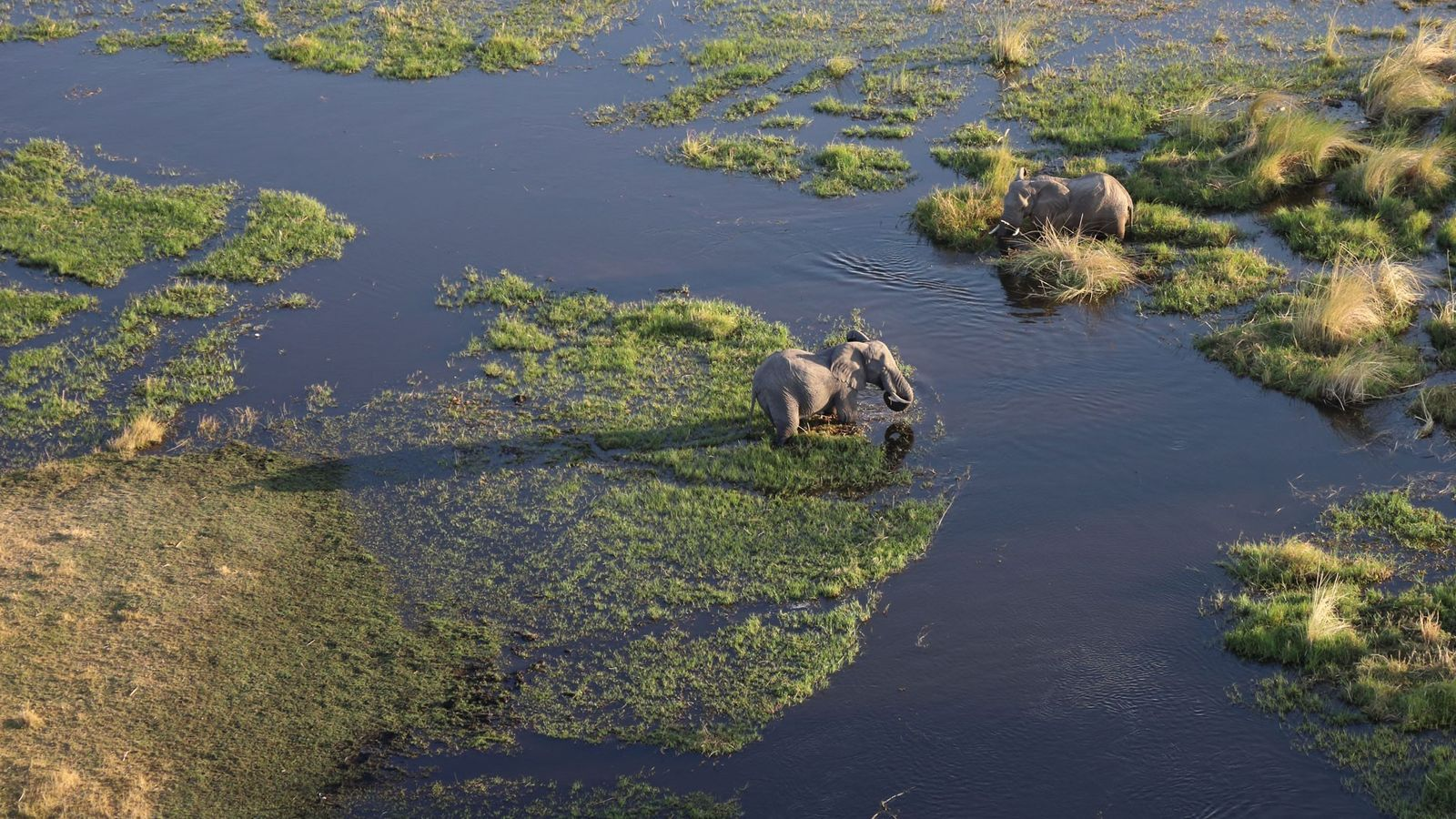 Aerial view of the waterways and islands of the Okavango Delta, with grazing elephants.