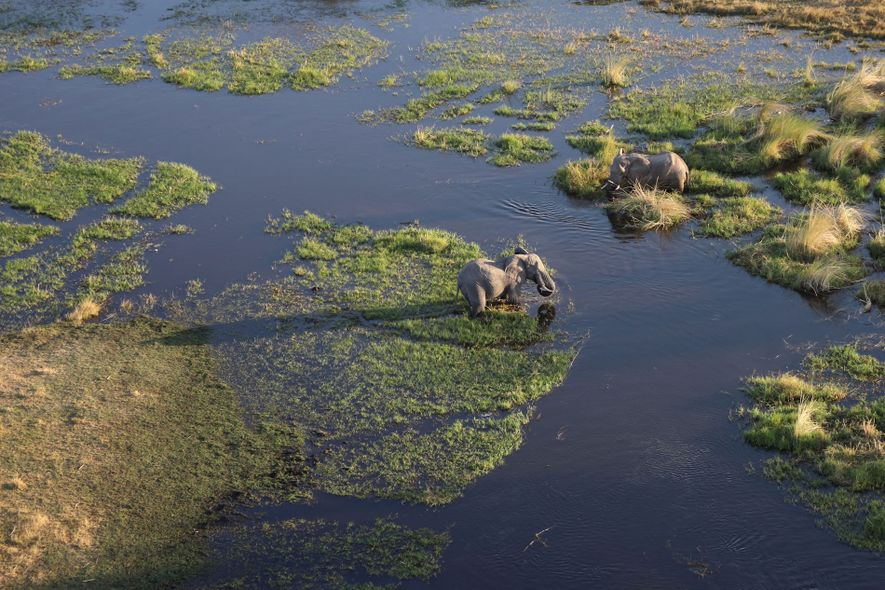 Recent droughts in Okavango's 100-mile-wide alluvial fan have brought together conservationists, local people and new safari ...