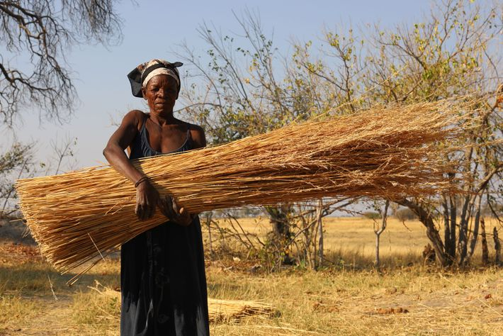 A kwai villager holds a bundle of dried grass for thatching