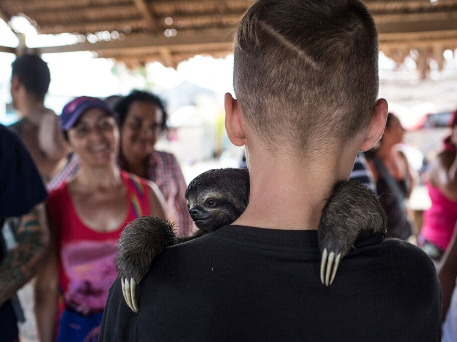 Boy With Sloth - Social Media and Wildlife Trafficking