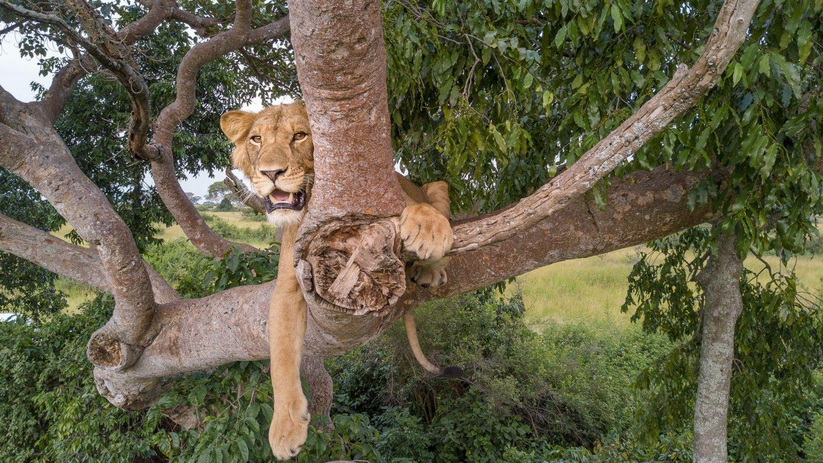 jacob in tree
