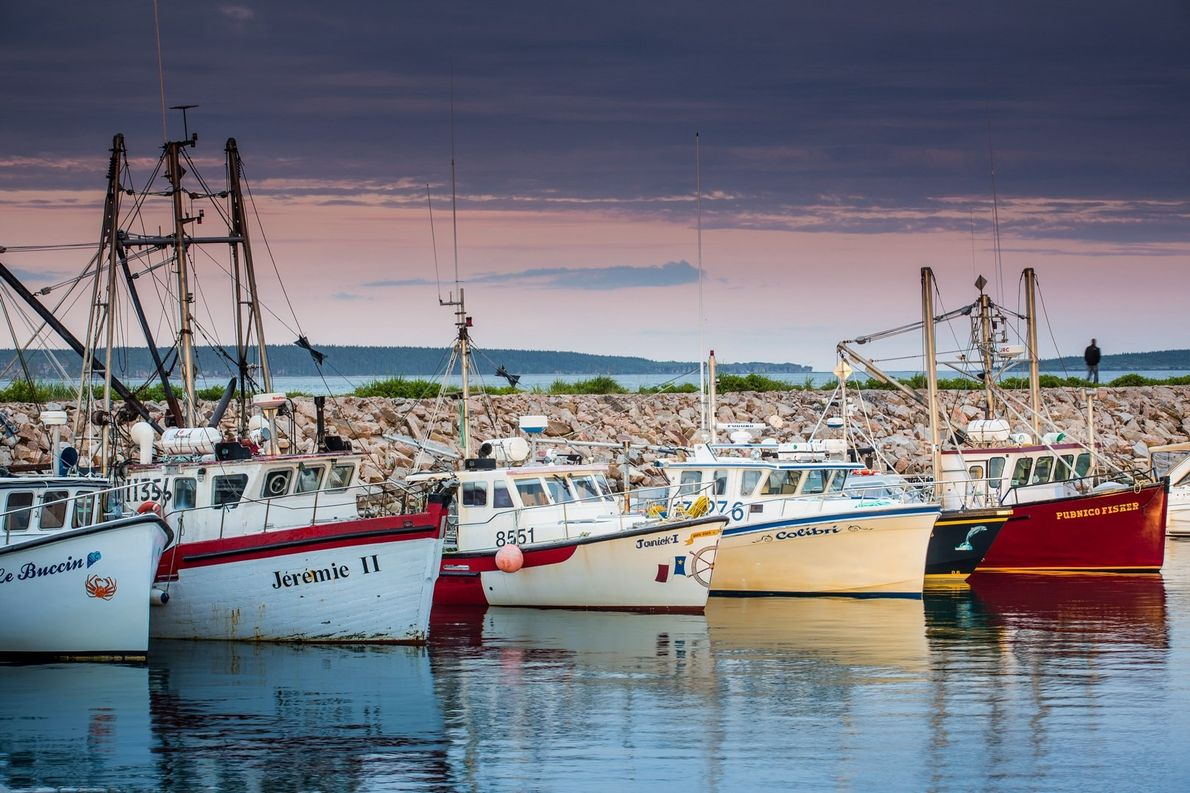 Brightly coloured fishing vessels bob in the Havre Saint-Pierre Harbour.