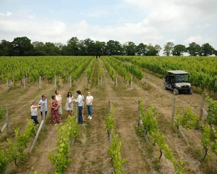 Visitors on a tour of Nyetimber estate.