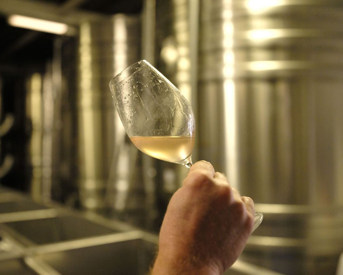 A man drinks a glass of Wiston Estate's delicious white wine.