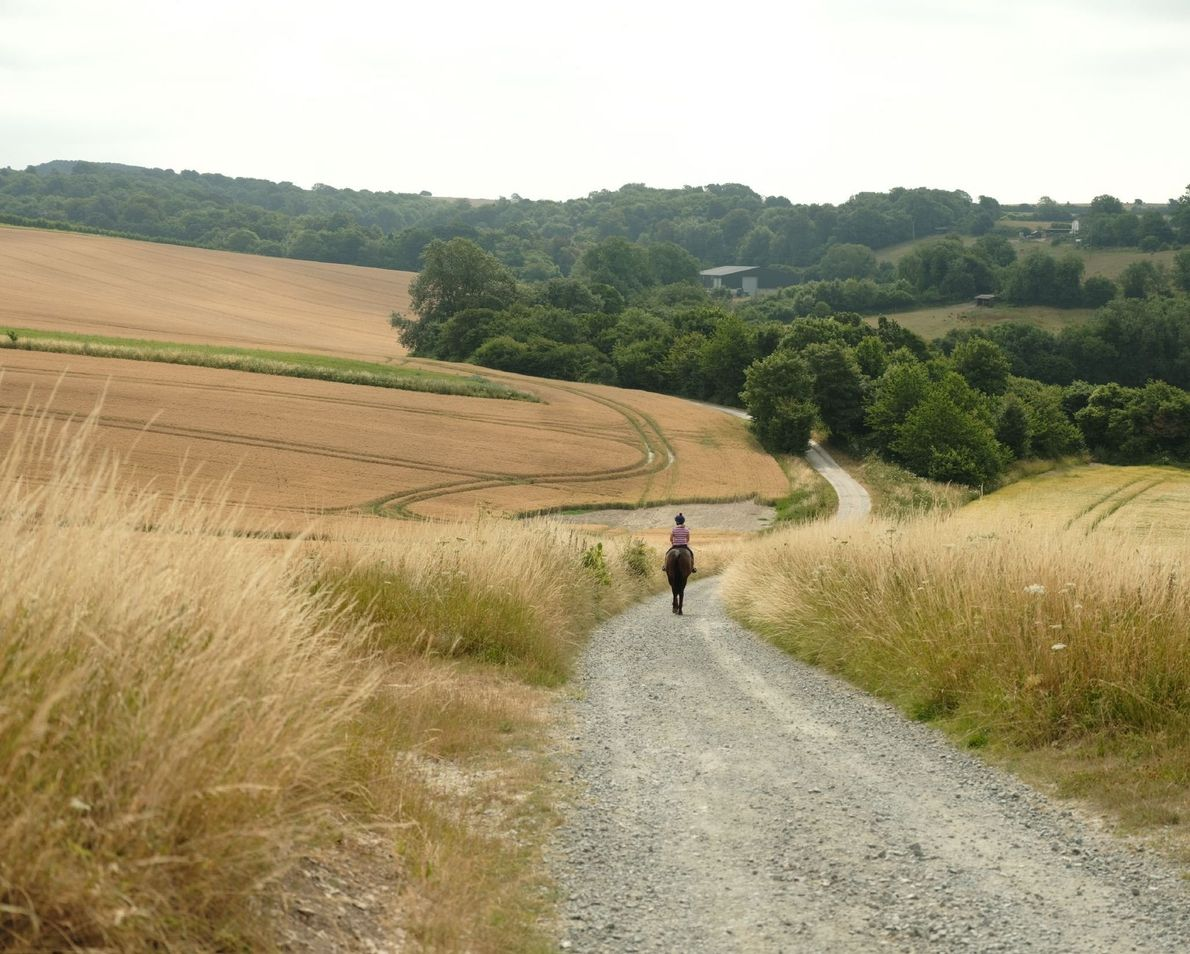 A lone rider navigates the hills of the Wiston Estate and vineyards.
