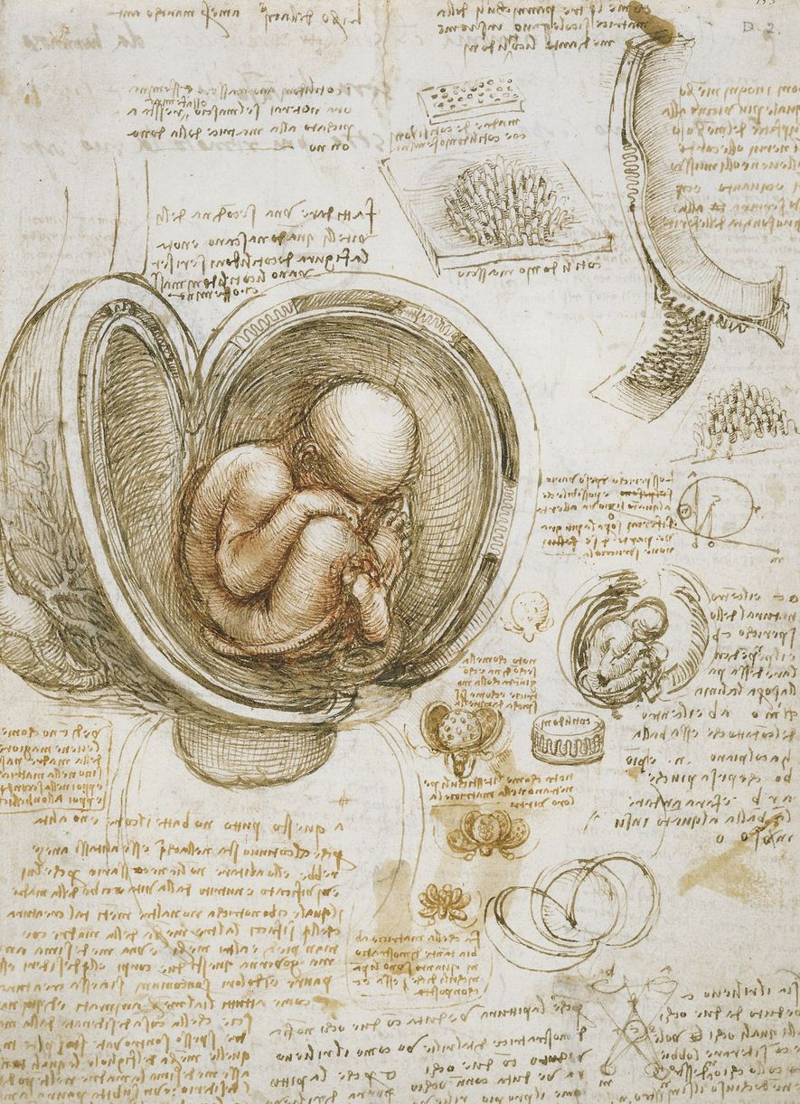 Leonardo was a highly accomplished anatomist whose dissections and acute observations informed his portrayals of the ...