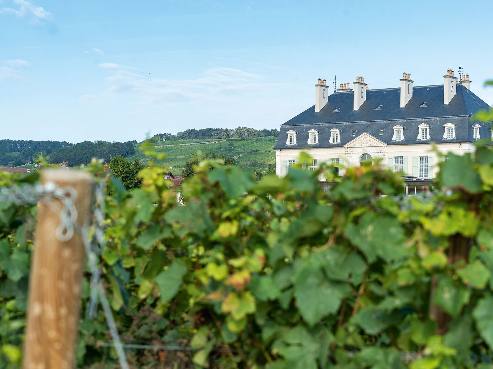 The vineyard at Château de Pommard, bought by a US entrepreneur in 2014 and set to ...