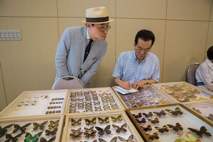 Collectors and dealers buy and sell butterfly specimens from Africa, Asia, the Americas, and beyond at ...