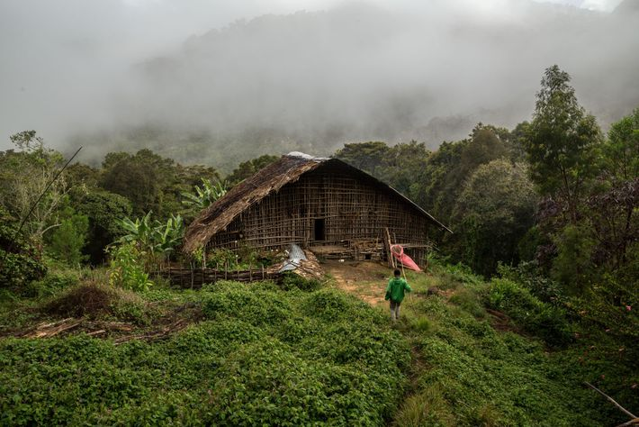 A butterfly catcher named Simeyon returns to his house in Tekai Conti, in West Papua. The ...