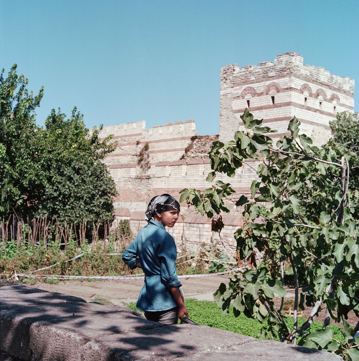 Vegetables and fruit have been grown for centuries in urban farms around the remnants of Istanbul's ...