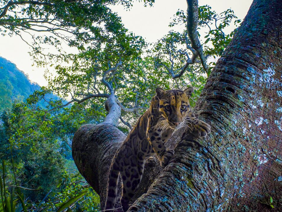 15 images show the diversity of India's big (and not so big) wild cats