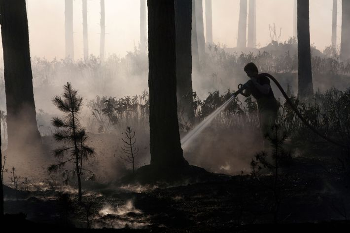 Dousing a rare woodland fire hit Swinley Forest, near Bracknell, Berkshire in 2011. Forest fires are uncommon in ...