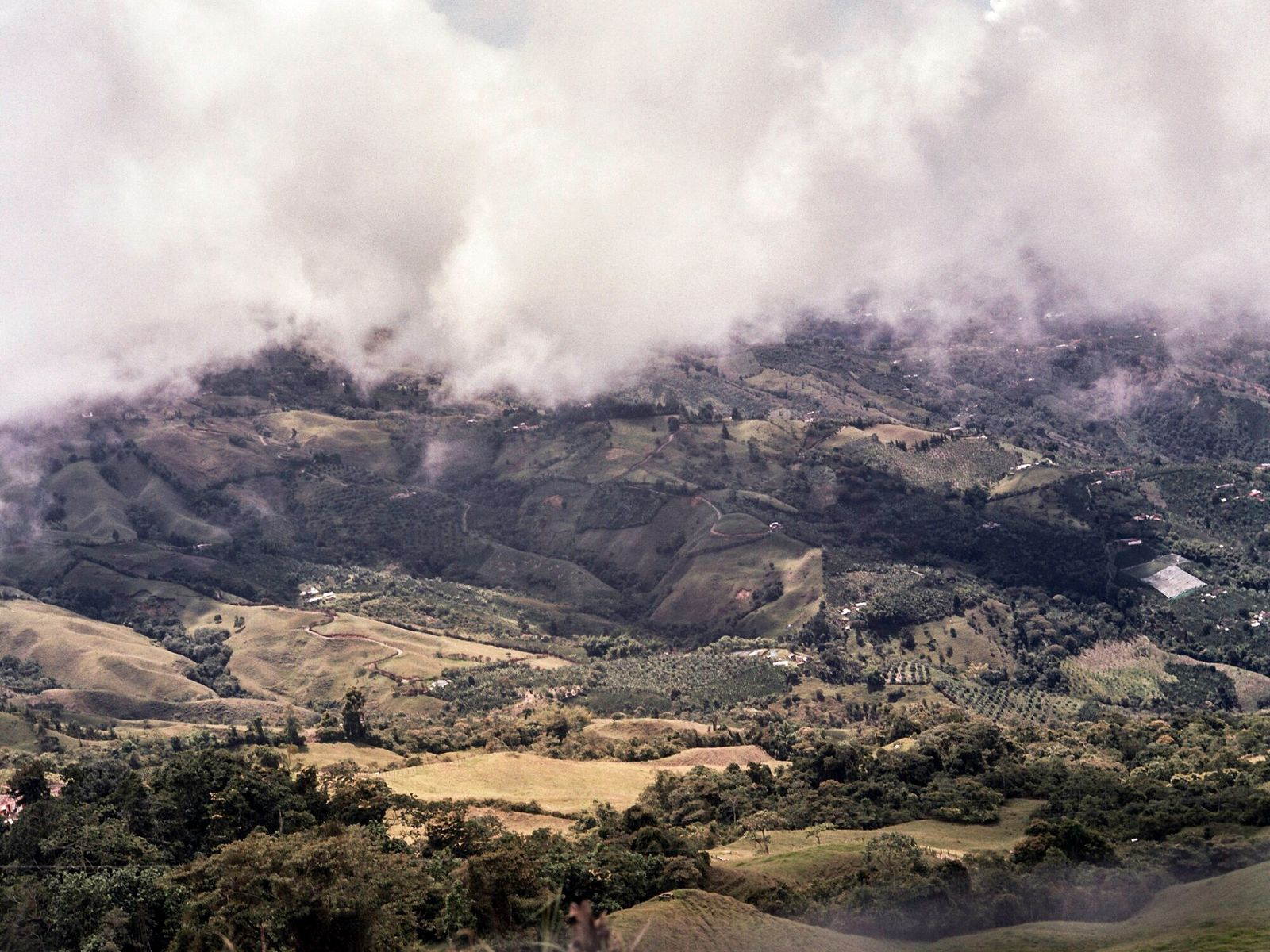 In this Colombian region, clouds roll down the mountains to infuse the soil. This phenomenon gives ...