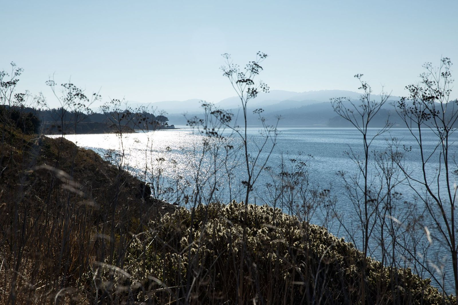 On the California Cheese Trail, looking out over Tomales Bay.